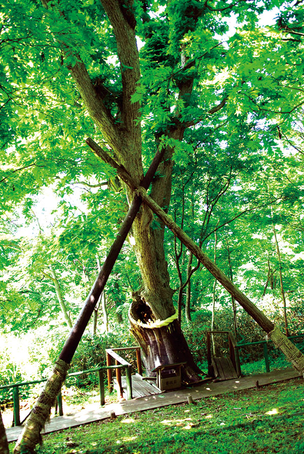 これは中央の木。一番細いが実は良縁・子宝パワーの種をくれる。恋愛祈願ならこの木。
