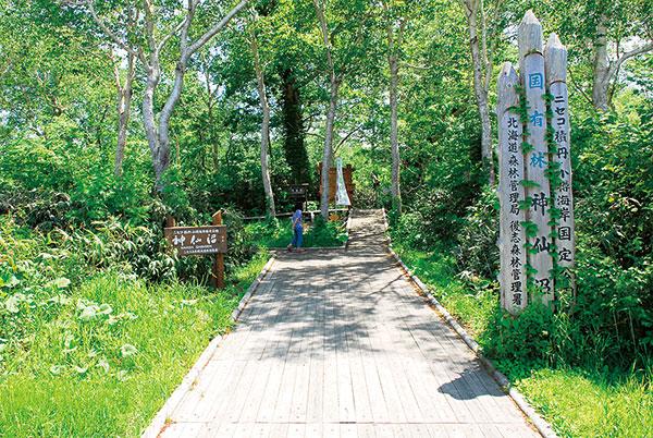 遊歩道は最初から最後まで木の板で作られており、とても歩きやすい。