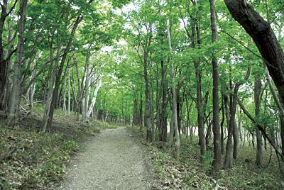 原生林が立ち並ぶ、見通しの悪いところでは低い声で「ホイホイ」。