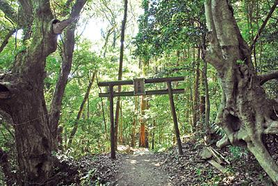 鳥居は神聖なる場所と俗世の結界。鳥居の両脇には自然の巨木がさらに結界を張っている。ここを通る際、空気感が変わる瞬間を味わおう!