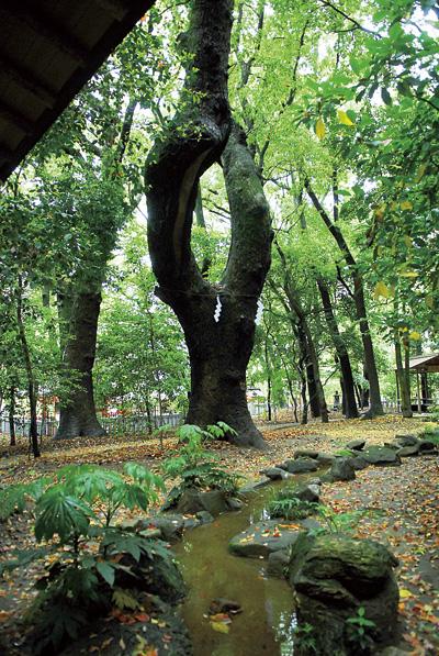 他にも御神木らしき巨木がありますので、自分にマッチする木を探すのも面白い。