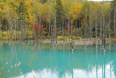 下流域にある『青い池』もヒーリングスポット。