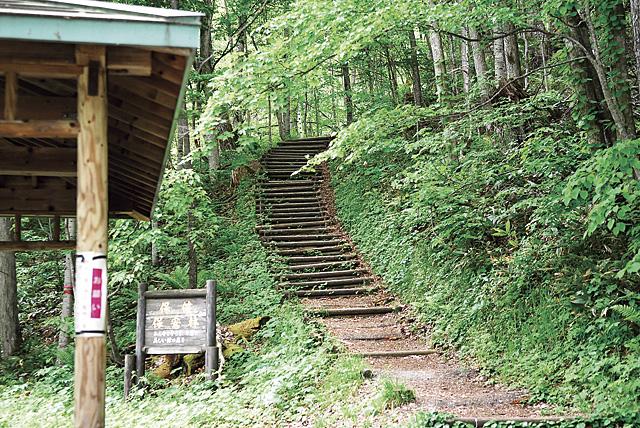 滝へと向かう森の入り口