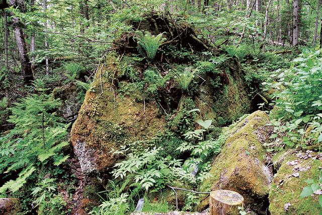 こんな岩がゴロゴロ転がっている。