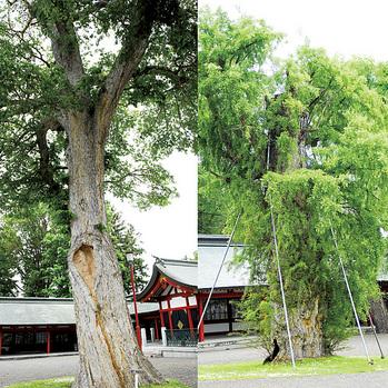 北海道 護国神社