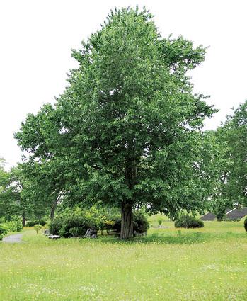 外国樹種 見本林